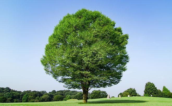 加倉井さおり「愛すること~まずは自分をもっと、もっと大切に」自分を木に例えると